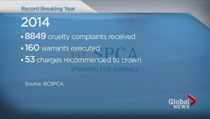 Animal cruelty calls to BC SPCA up by 1,000 calls